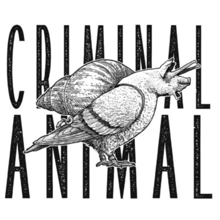 Logo de la page artiste Criminal Animal